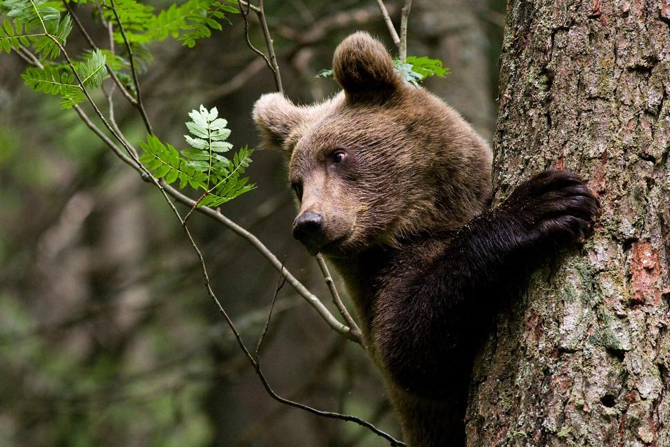 Výsledok vyhľadávania obrázkov pre dopyt medved